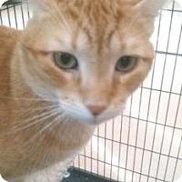 Adopt A Pet :: Ranger - Miami, FL