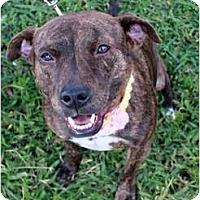 Adopt A Pet :: Sadie - Orlando, FL