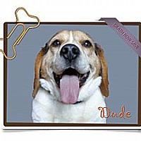 Adopt A Pet :: Dude - Portland, OR