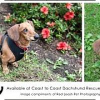Adopt A Pet :: Rusty - MD - Jacobus, PA