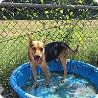 Adopt A Pet :: Lane - Lufkin, TX
