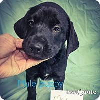 Adopt A Pet :: Emerson - Cumming, GA