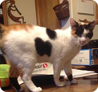 Calico Cat for adoption in Eureka, California - Moana