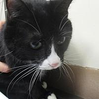 Adopt A Pet :: Zayla - Reno, NV
