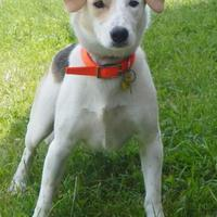 Adopt A Pet :: Charlie - Clearfield, PA