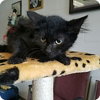 Adopt A Pet :: Anchovy - Umatilla, FL