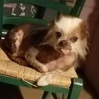 Adopt A Pet :: TeeTee - Tucson, AZ