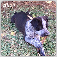 Adopt A Pet :: Alize - DeForest, WI