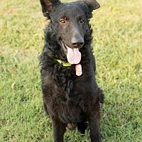 Adopt A Pet :: Newton - Greeneville, TN