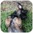 Photo 4 - German Shepherd Dog Mix Puppy for adoption in Houston, Texas - Adeline