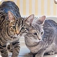 Adopt A Pet :: Mitzie & Trixie - Chicago, IL