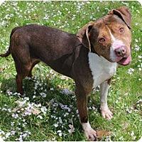Adopt A Pet :: Montel - Chicago, IL