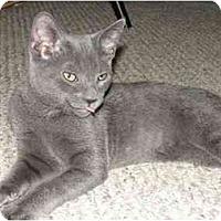 Adopt A Pet :: Aang - Jenkintown, PA
