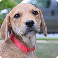 Adopt A Pet :: Kacey - South Jersey, NJ