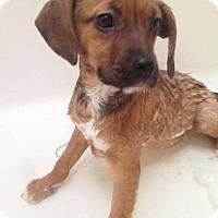 Adopt A Pet :: Jena - Carey, OH
