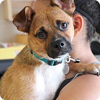 Adopt A Pet :: Huck - Knoxville, TN