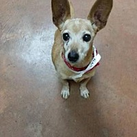 Adopt A Pet :: Neil - Scottsdale, AZ