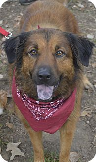 Shepherd (Unknown Type) Mix Dog for adoption in Germantown, Tennessee - Cybill