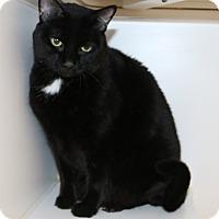 Adopt A Pet :: Beedle - Council Bluffs, IA