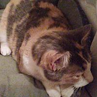 Adopt A Pet :: Callie - McEwen, TN