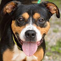 Adopt A Pet :: Sadie - Virginia Beach, VA