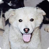 Adopt A Pet :: Nickey - Phoenix, AZ