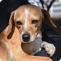 Adopt A Pet :: Tye - Mountain Center, CA