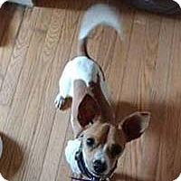 Adopt A Pet :: Coque - Chantilly, VA