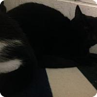 Adopt A Pet :: Dewey - Potsdam, NY