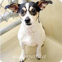 Adopt A Pet :: Jasmine - Winder, GA