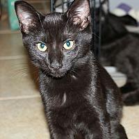 Adopt A Pet :: Patience - Huntsville, AL