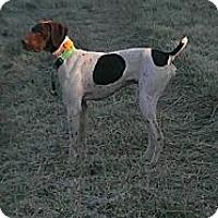 Adopt A Pet :: Bandit - Streetsboro, OH