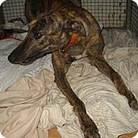 Adopt A Pet :: CRT X The Spot - Knoxville, TN