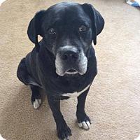 Adopt A Pet :: Sparky - Winchester, VA