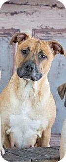 Boxer/Labrador Retriever Mix Dog for adoption in Vandalia, Illinois - Journey