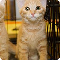 Adopt A Pet :: Skyler - Irvine, CA