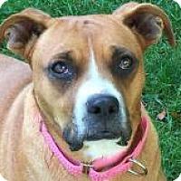 Adopt A Pet :: Geneva - Naugatuck, CT