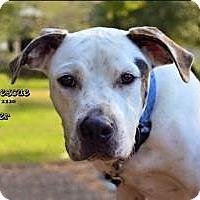 Adopt A Pet :: Pepper - Victoria, TX