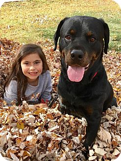Rottweiler Mix Dog for adoption in Frederick, Pennsylvania - Dylan