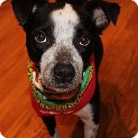 Adopt A Pet :: Kara - Alpharetta, GA
