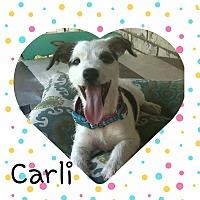 Adopt A Pet :: Carli - Wichita Falls, TX