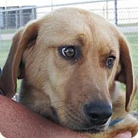 Adopt A Pet :: Sophie - Germantown, MD