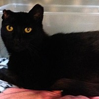 Adopt A Pet :: Jem Finch - Columbus, OH