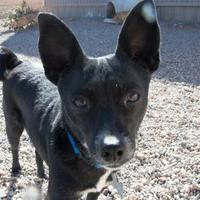 Adopt A Pet :: China - Rio Rancho, NM