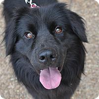 Adopt A Pet :: Neil - Atlanta, GA