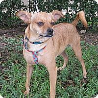 Adopt A Pet :: KORBIE - Houston, TX