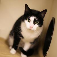 Adopt A Pet :: Molly - Boone, NC