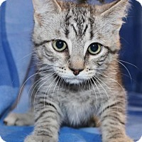 Adopt A Pet :: Treena - Hillsdale, IN