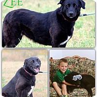 Adopt A Pet :: Zahita - DeForest, WI