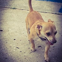Adopt A Pet :: TATER - DeLand, FL